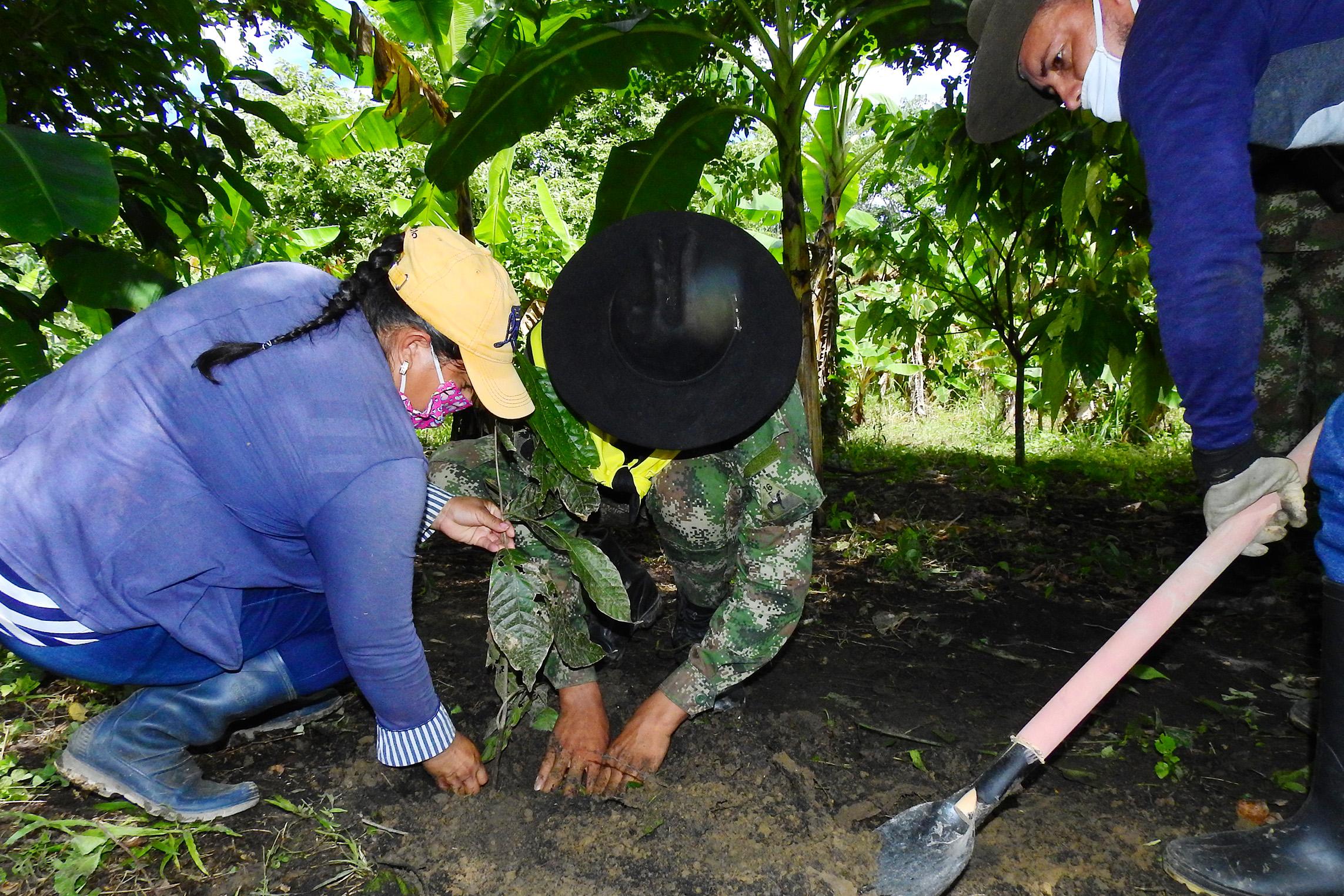 Reforestación en Casanare