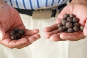 Juegos tradicionales llaneros: Pares o nones, juego hecho con el fruto de la palma.