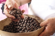 Juegos tradicionales llaneros: El fruto de la palma, es conocido en el llano como mararay. Lo utilizan para realizar varios juegos en semana santa.